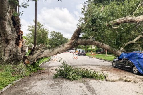 A damaged tree from hurricane